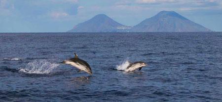 delfini Isole eolie